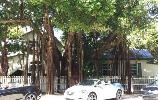 2016 Buick Cascada in front of a Banyan tree